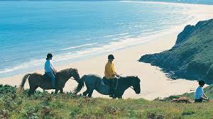 SWANSEA_HORSE