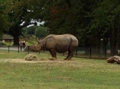 Whipsnade_Rhino
